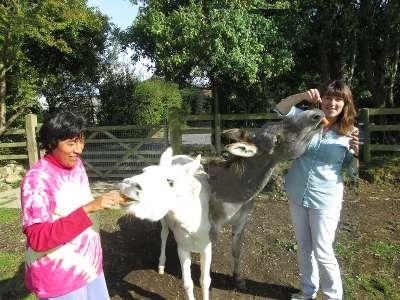 blaenaus-donkeys.jpg