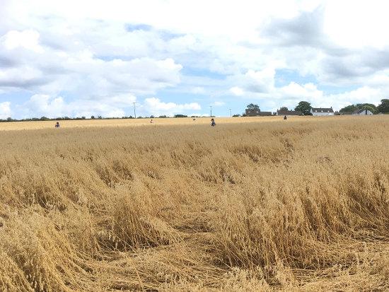 harvestworkers.jpg