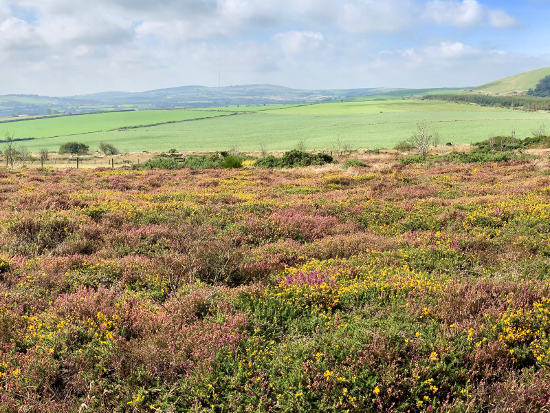 heather-hills.jpg