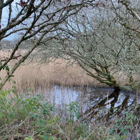 Pond in Teifi Marsh from woods