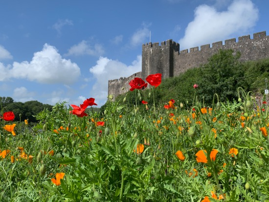Pembroke Castle in bloom!