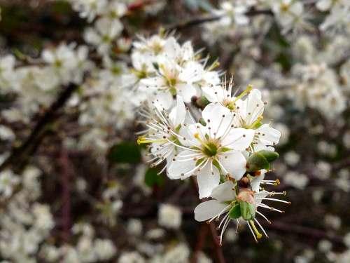 spring2015-blossoms.jpg